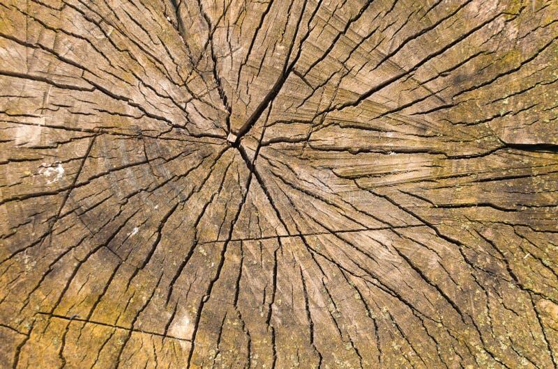Rżnięta stara drewniana tekstura doskonalić tło obrazy royalty free