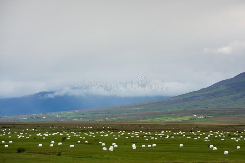 Rżnięta trawa przygotowywa dla zima magazynu na polach, Iceland fotografia stock