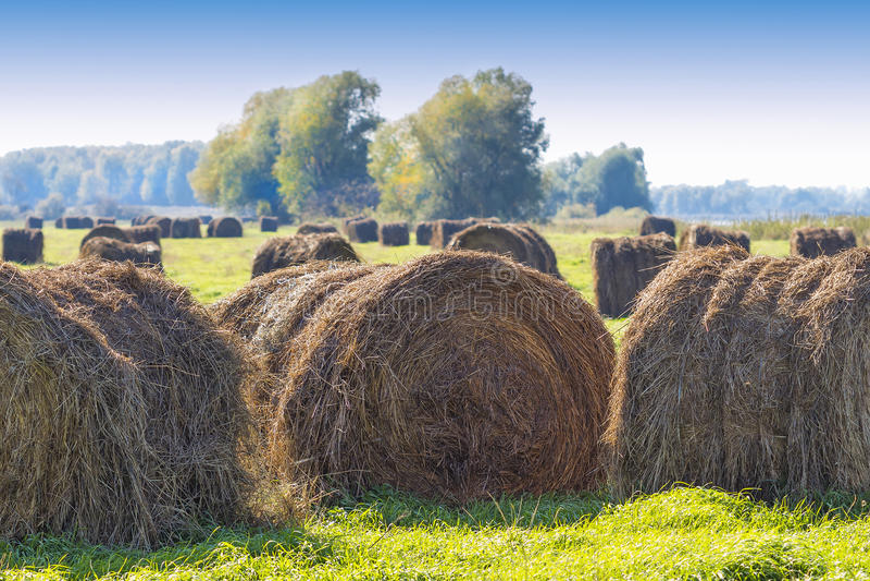 Rżnięta trawa w belach w zalewających polach rzeką obrazy stock