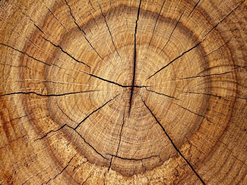 rżnięty dębowy drzewo obraz stock