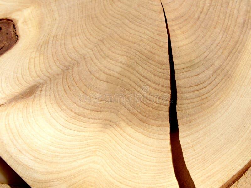 rżnięty drewno zdjęcie stock