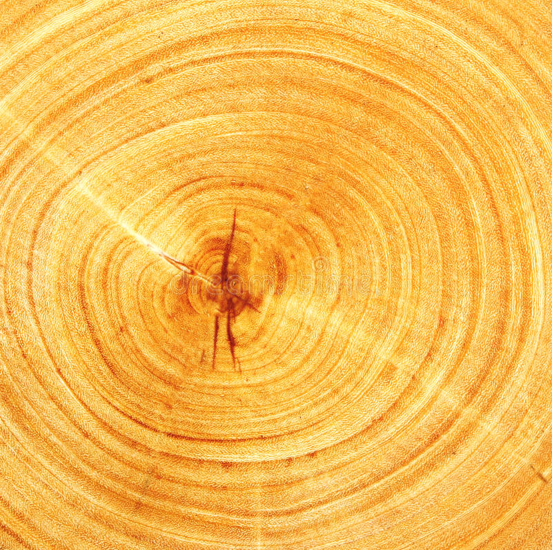 rżnięty drewno fotografia royalty free