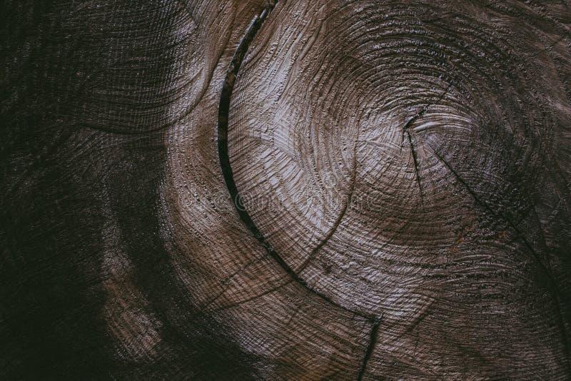 Rżnięty drzewnego bagażnika tło i tekstura Drewniana tekstura rżnięty drzewny bagażnik Zbliżenie widok stara drewniana tekstura A zdjęcie stock