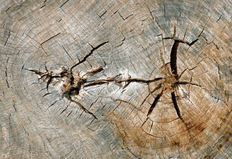 Download Rżnięty drzewo obraz stock. Obraz złożonej z szczegółowy - 53793679