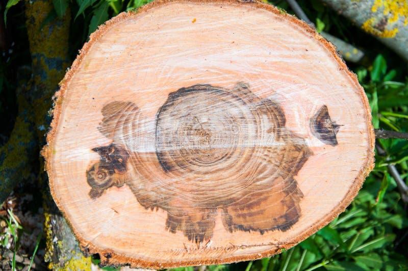Rżnięty gęsty drzewny bagażnik Drewniana tekstura obrazy stock