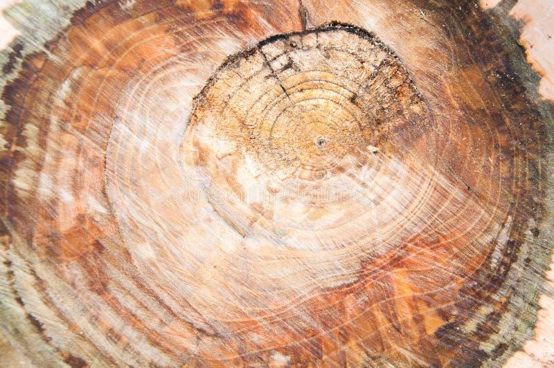 rżnięty gęsty drzewny bagażnik Drewniana tekstura zdjęcia stock