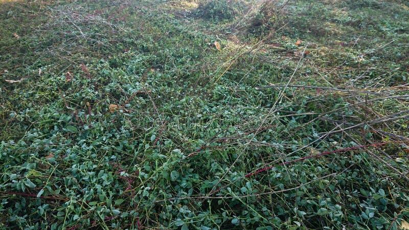 Rżnięty trawy pole zdjęcie stock