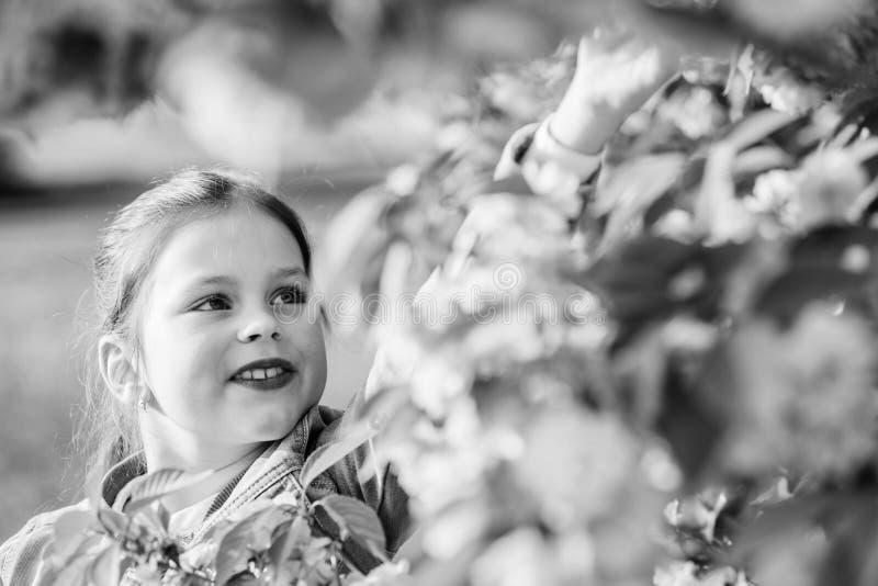 r Ομορφιά παιδικής ηλικίας ευτυχές κορίτσι στο λουλούδι κερασιών Άνθιση δέντρων Sakura μυρωδιά ανθών, αλλεργία Skincare στοκ εικόνες με δικαίωμα ελεύθερης χρήσης