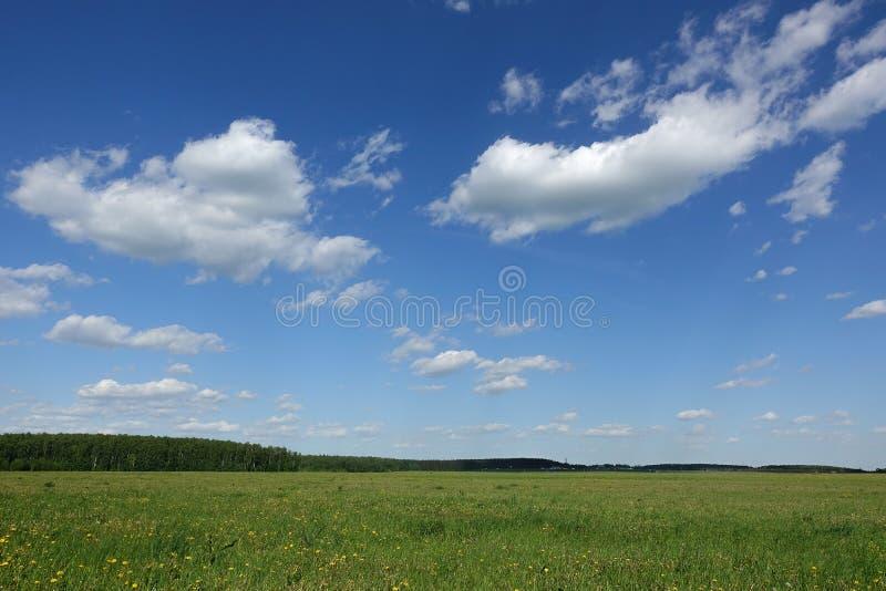 r Πράσινοι τομέας και μπλε ουρανός χλόης με τα άσπρα σύννεφα στοκ φωτογραφία με δικαίωμα ελεύθερης χρήσης