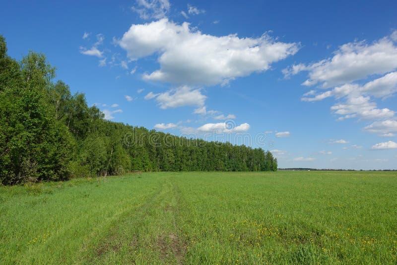 r Πράσινοι τομέας και μπλε ουρανός χλόης με τα άσπρα σύννεφα στοκ εικόνες
