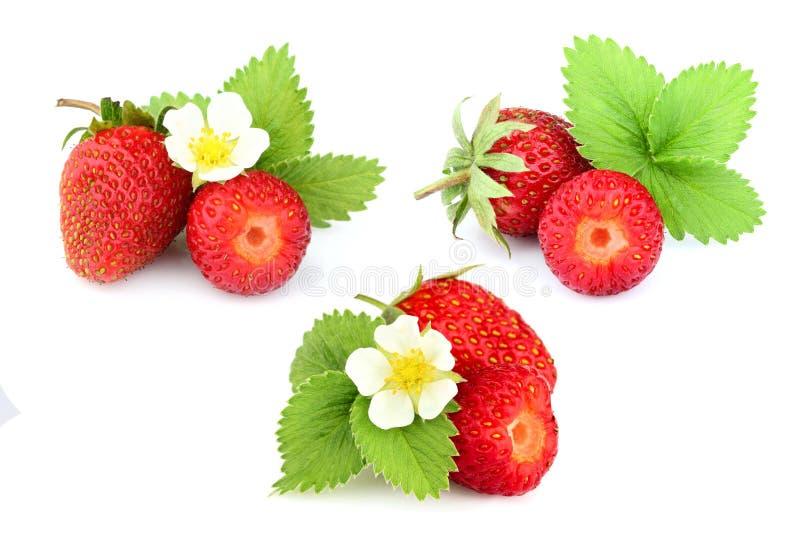 r Φυσική σπιτική φράουλα με τα φύλλα και το λουλούδι φραουλών στοκ εικόνα με δικαίωμα ελεύθερης χρήσης
