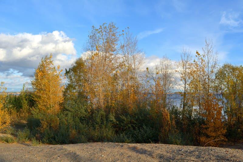 r Деревья с золотой и зеленой листвой растут на пейзаже побережья реки красивом стоковые изображения rf