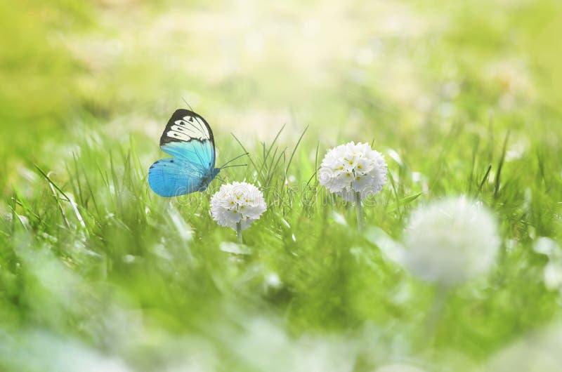 r Зеленая трава, белый цветок и бабочка на луге стоковая фотография