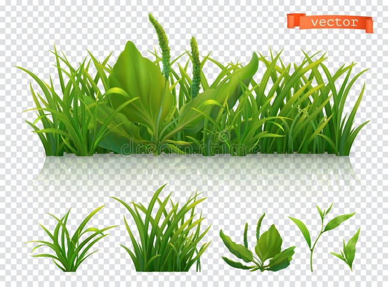 r Зеленая трава, реалистический набор значка вектора 3d бесплатная иллюстрация