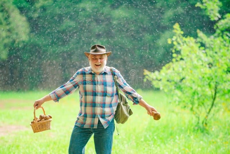 r Идти старика Пенсионер Grandpa Старшие пешие грибы в дождливых лете и хобби леса стоковое изображение
