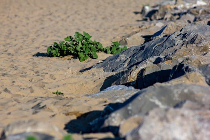 r изображение песка который встречает утесы стоковое изображение rf