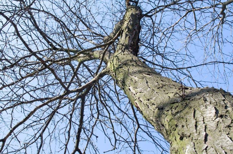 r Кора дерева r Дерево против голубого неба Крупный план дерева и запачканная предпосылка Растительность greenery Городская приро стоковые изображения rf