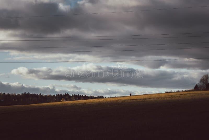 r Красивое поле с золотой травой на предпосылке пасмурных бурных неба и облаков Идти несколько людей стоковые изображения