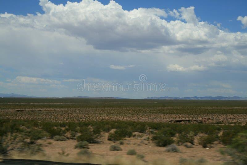 r Ландшафт пустыни в Неваде завод пустыни стоковые фотографии rf