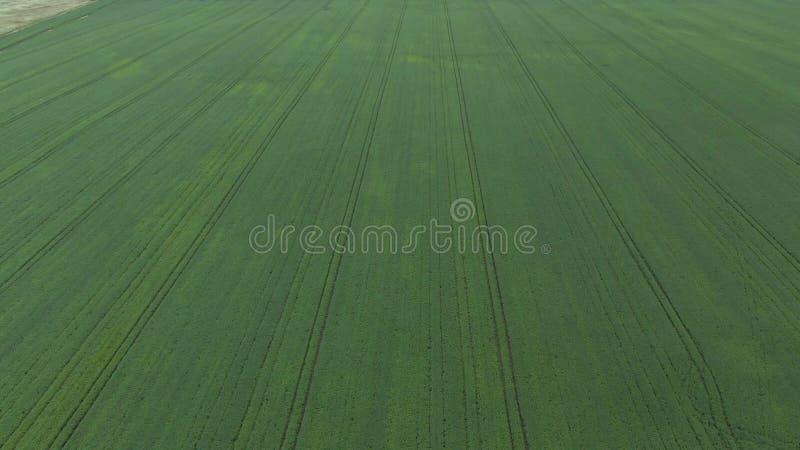 r Полет над молодым кукурузным полем стоковое фото