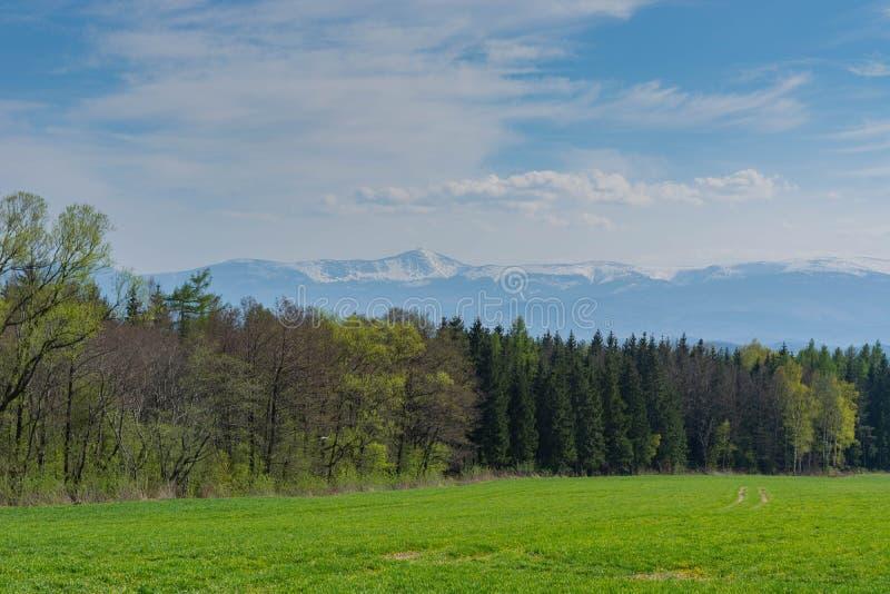 r Поле засеянных овсов, леса и гор стоковые фотографии rf