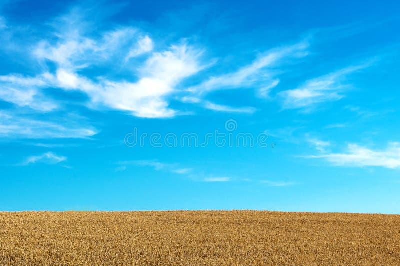 r Поле зерна стоковая фотография
