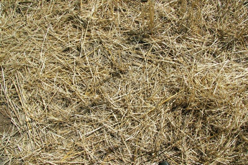 r Солома на склоняя поле весной стоковые изображения rf