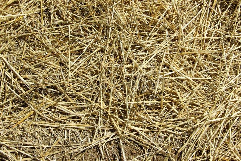 r Солома на склоняя поле весной стоковые фото