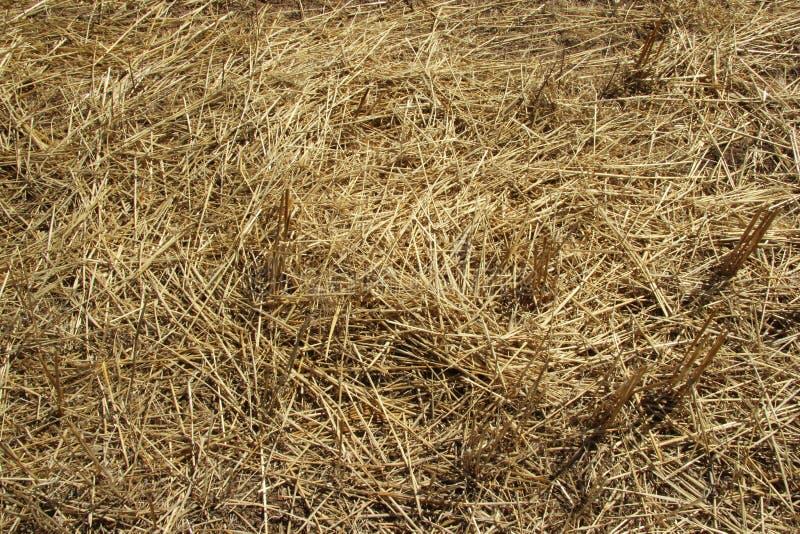 r Солома на склоняя поле весной стоковые фотографии rf