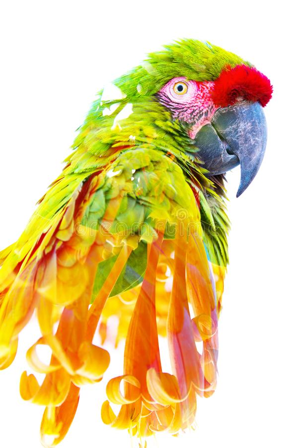 r 与美丽的橙色花结合的一只热带鹦鹉的照片 免版税库存图片