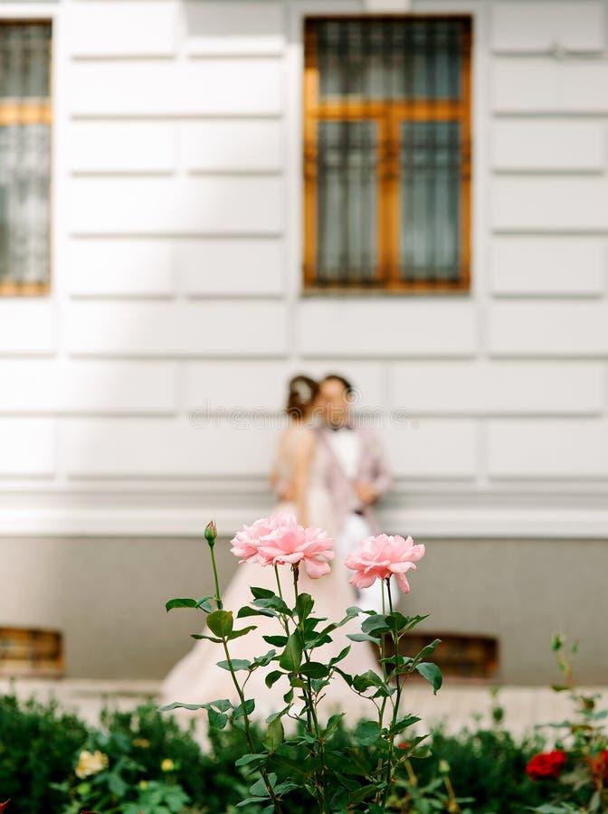 r 亲吻在大厦,在前景的玫瑰附近的新娘和新郎 免版税库存照片