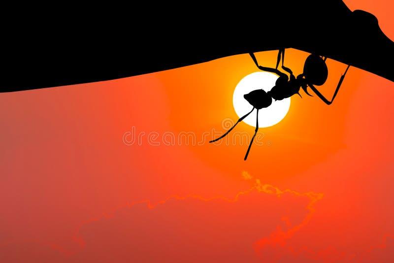 r 垂悬在叶子的蚂蚁 皇族释放例证