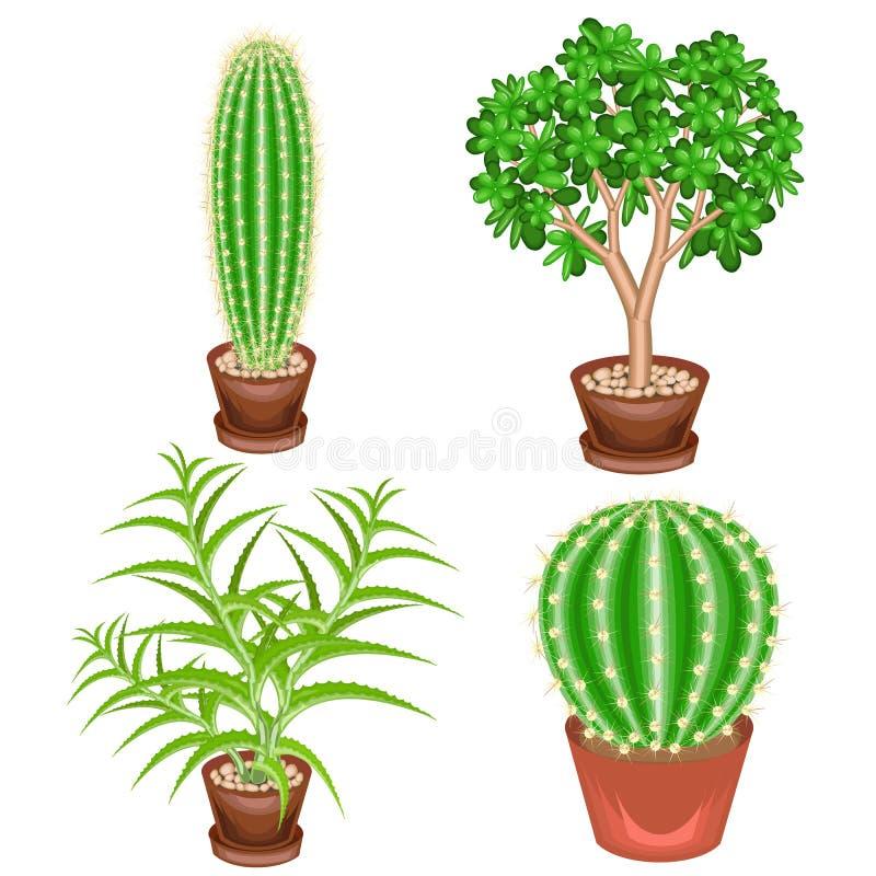 r 室内植物的一汇集在罐的 景天树,芦荟维拉,仙人球,Mammillaria 收藏家的可爱的爱好  库存例证
