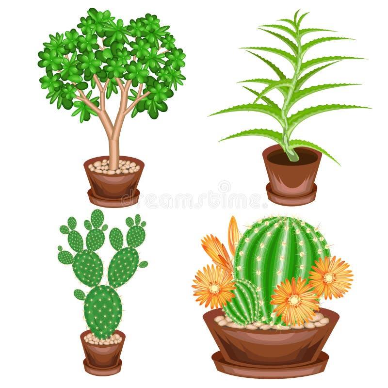 r 室内植物的一汇集在罐的 景天树,芦荟维拉,仙人球,Mammillaria 收藏家的可爱的爱好  皇族释放例证