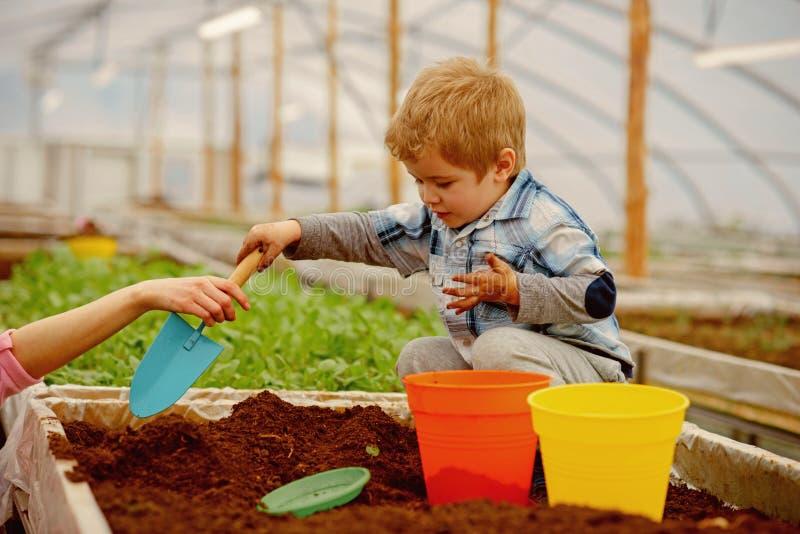 r 小男孩工作自温室 小男孩与土壤的花匠戏剧 小男孩需要母亲帮助  ? 免版税库存照片