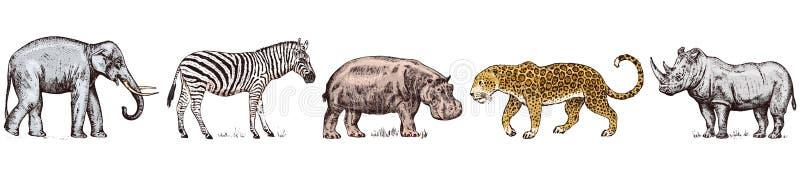 r 犀牛大象河马豹子野生斑马 被刻记的手拉的葡萄酒老单色徒步旅行队 皇族释放例证