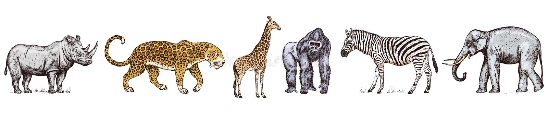 r 犀牛大象长颈鹿河马豹子鬣狗西部大猩猩野生斑马 刻记手拉 库存例证