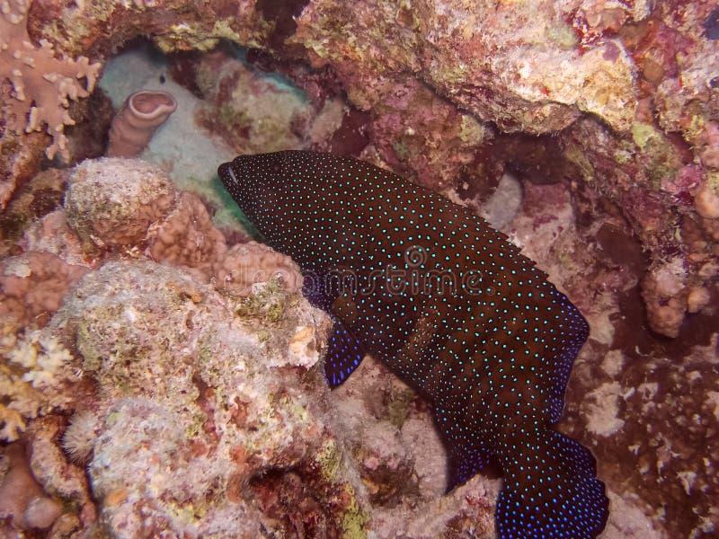 r 珊瑚礁和它 免版税库存图片