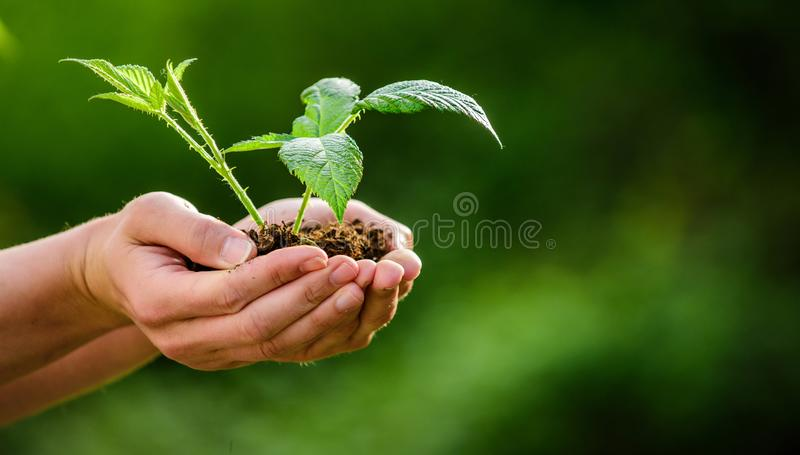 r 生态环境概念 E Eco?? o o 新的生活诞生 图库摄影