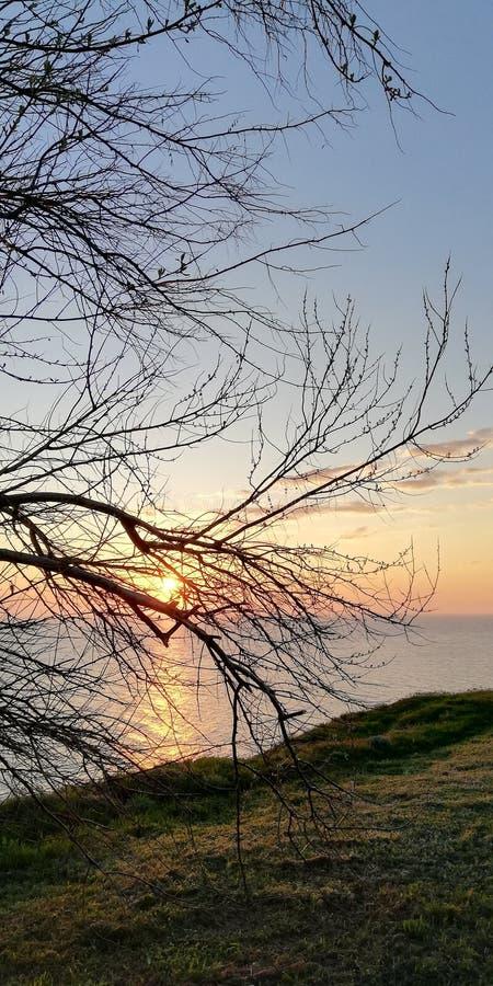 ?? r 系带树黑暗的分支反对日落天空和海 免版税库存图片