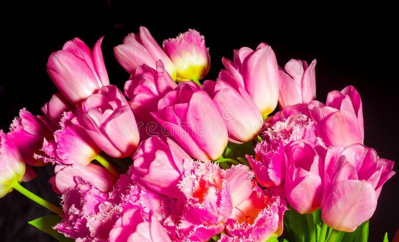 r r r 美丽的浪漫花 免版税库存照片