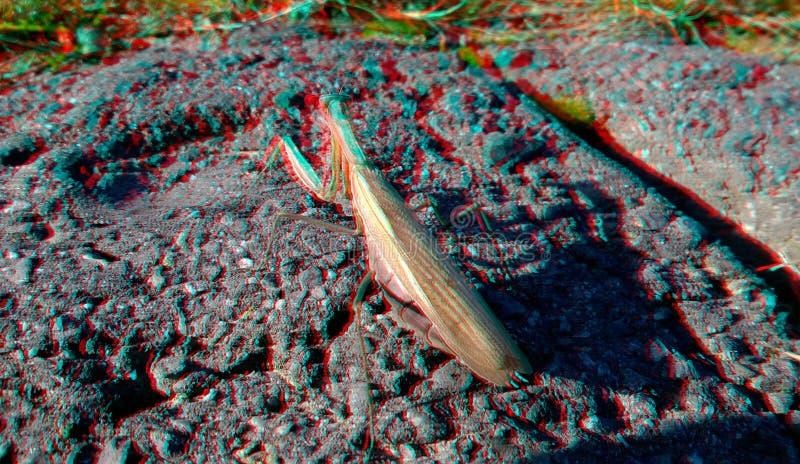 r 螳螂昆虫本质上作为绿色自然灭绝和害虫控制的标志 库存图片