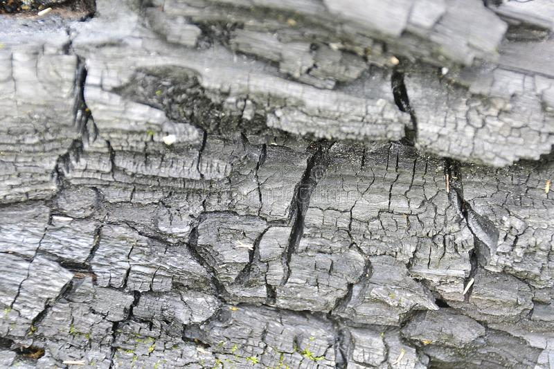 r 被烧焦的木抽象背景 木柴一个热的被烧焦的片断的特写镜头  免版税库存照片