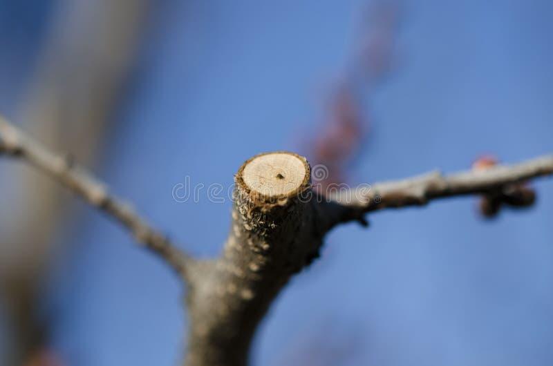 r 许多割包皮年轻树枝 图库摄影