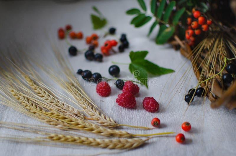 r 麦子、莓、花揪和黑醋栗莓果的耳朵在一张亚麻制桌布的 图库摄影