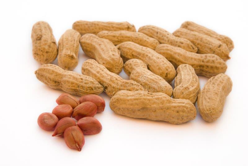 rå jordnötter arkivbild