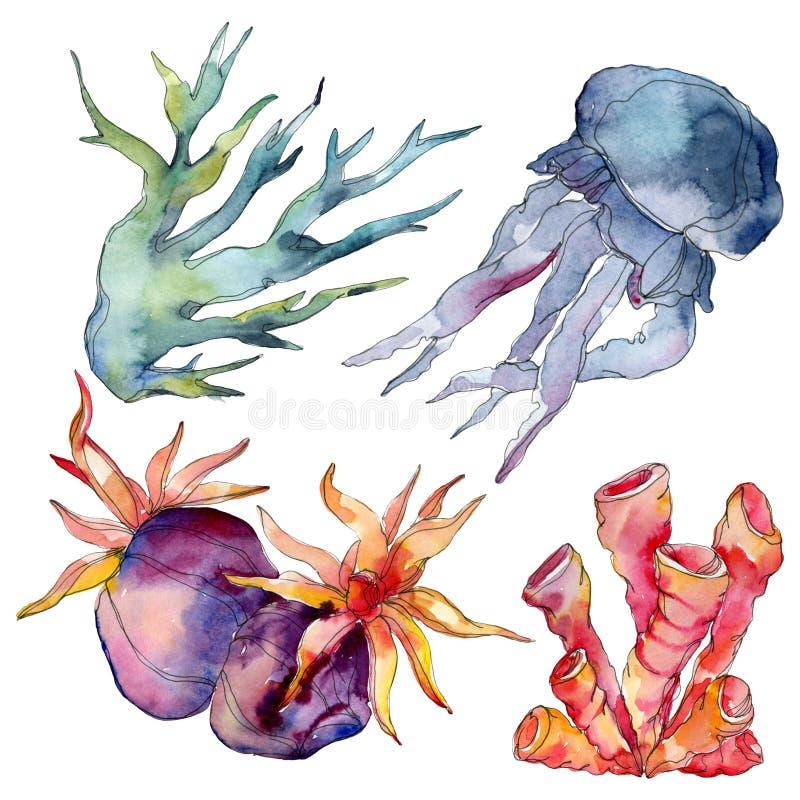 R?cif coralien de m?duses et de nature sous-marine aquatique Mer de plante tropicale d'isolement Ensemble d'illustration de fond  illustration libre de droits
