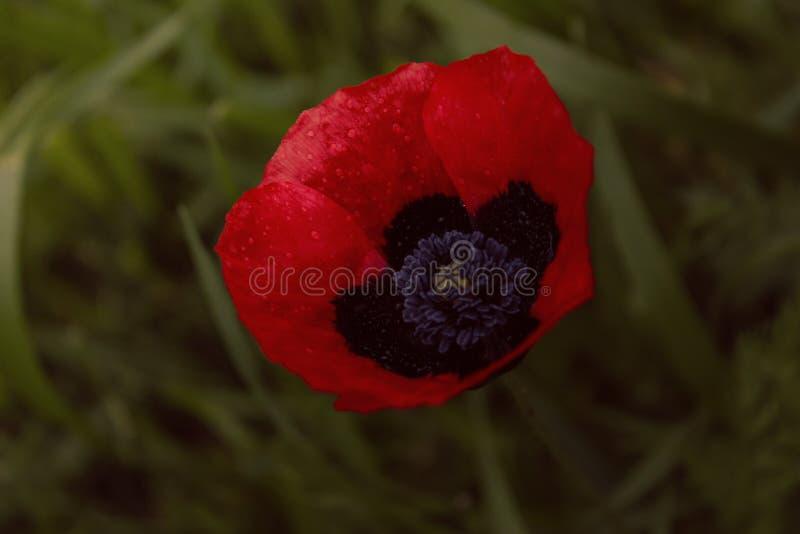 R?d blomma f?r berg royaltyfri fotografi