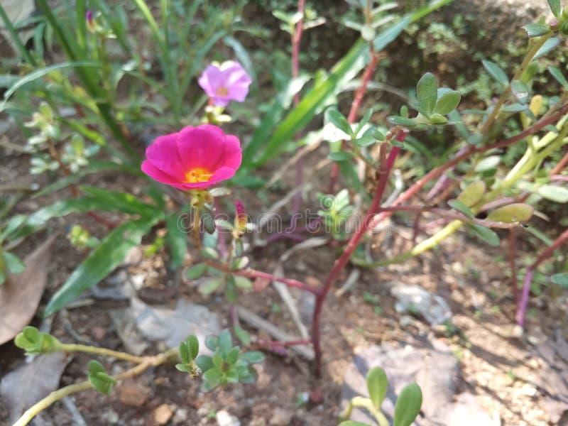 R?d blomma p? tr?dg?rden fotografering för bildbyråer