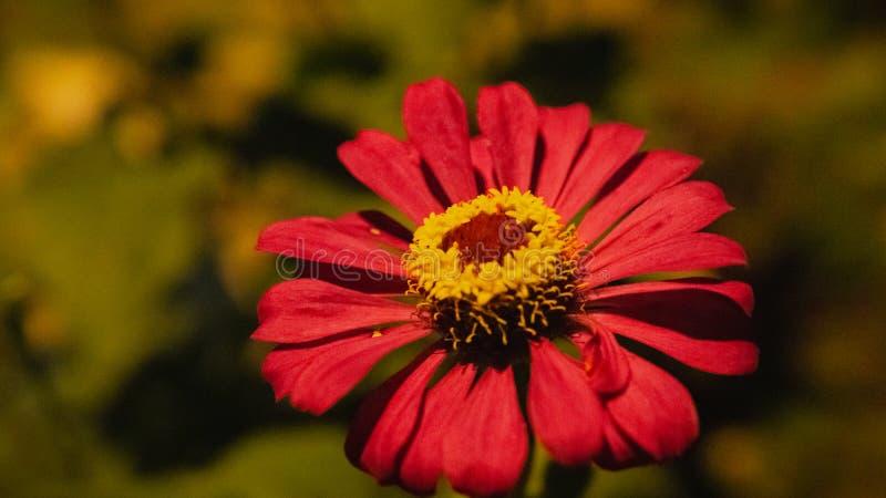 R?d blomma som blommar under gataljuset fotografering för bildbyråer